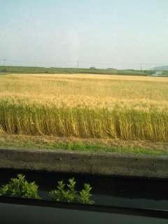 麦秋のころ