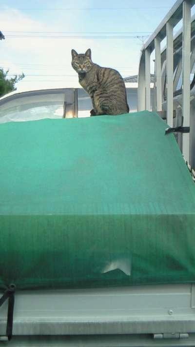 猫の目つき