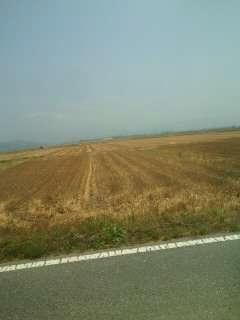 焼いた麦畑