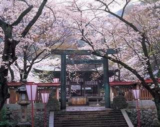 金ヶ崎公園花換えまつり