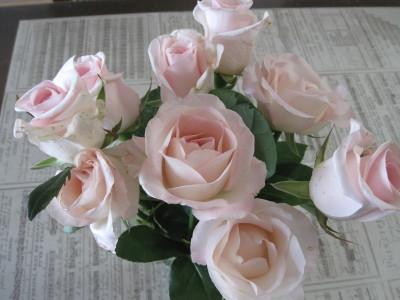 お守りのバラ