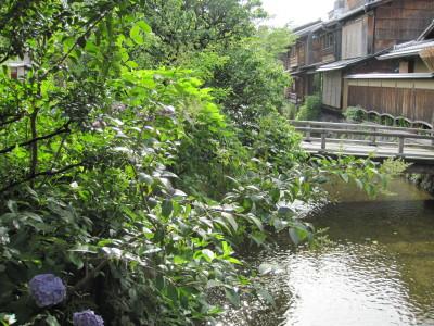 北白川の紫陽花