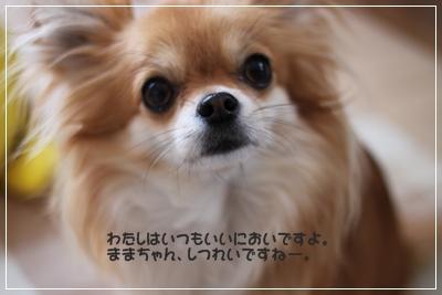 IMG_2350.jpg