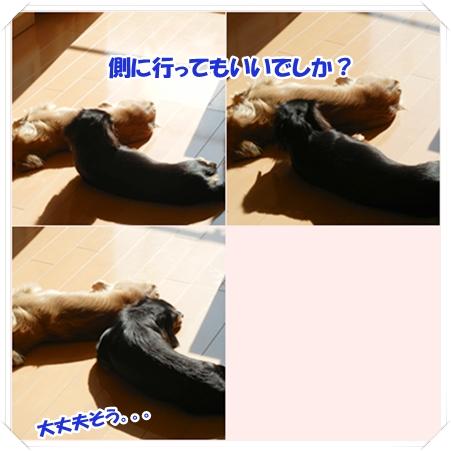 cats_20111202194447.jpg