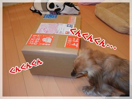 dc121705_20111220105053.jpg
