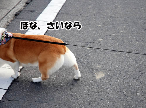 つーにゃん神戸へ帰る