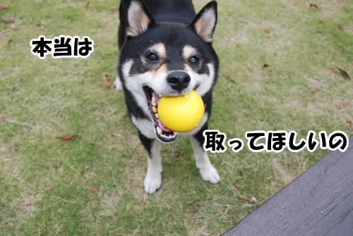 ボールは本当に好きです