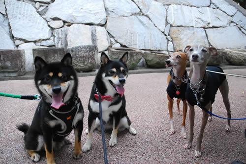 fourdogs.jpg
