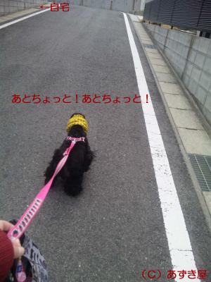 azuki1057.jpg