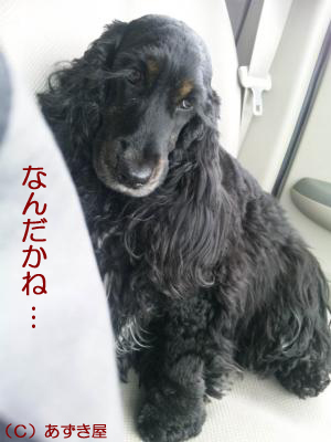 azuki1091.jpg