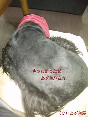 azuki823.jpg