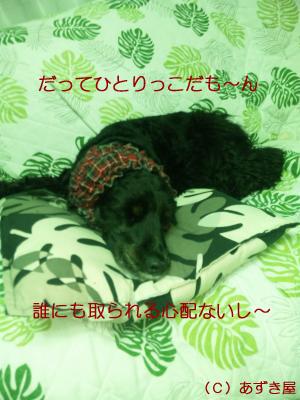 azuki870.jpg