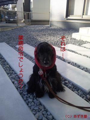 azuki879.jpg