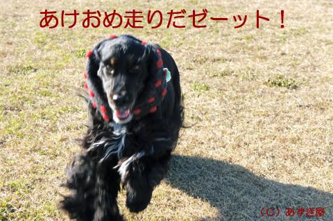 azuki904.jpg