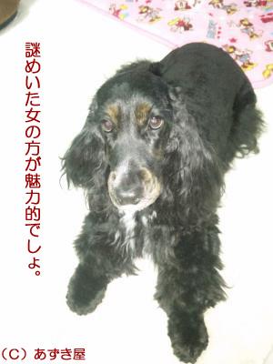 azuki968.jpg