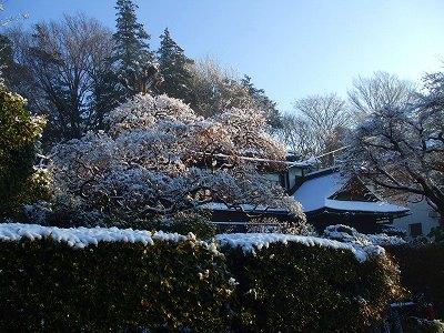 雪の朝 (1)