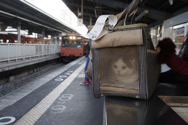 駅でペンタくん