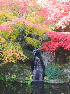 箱根美術館の紅葉1