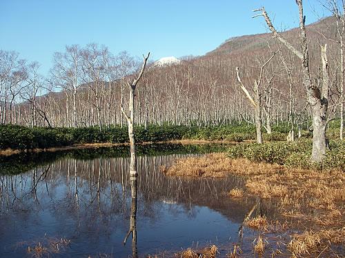 hitokoma2010-1121-2.jpg