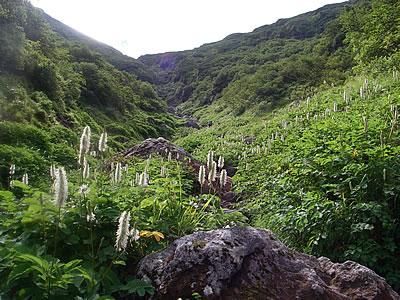 hitokoma2010-823-4.jpg
