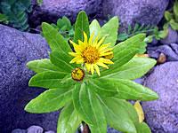 hitokoma2010-84-5.jpg