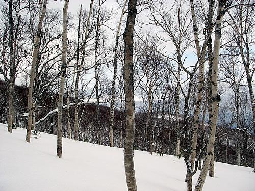 hitokoma2011-129-1.jpg