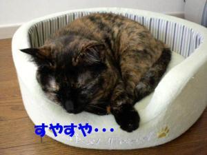 猫ベットビッケ