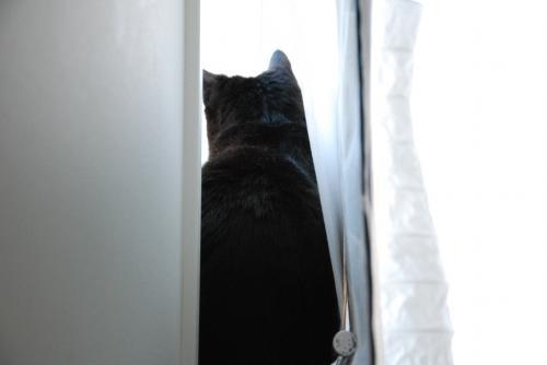 窓際警備中