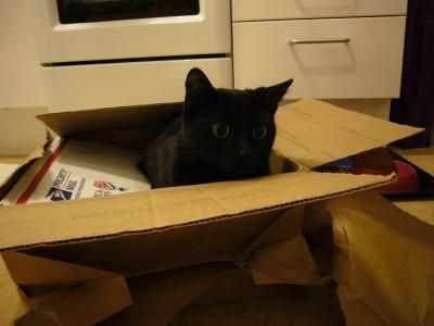 箱にしのびよる敵がっ