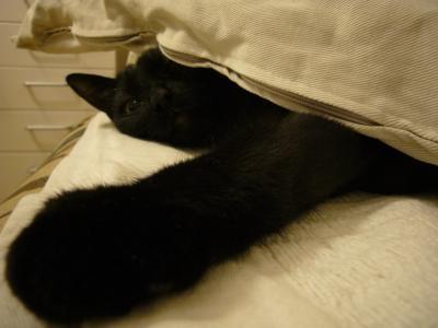 黒猫も見た