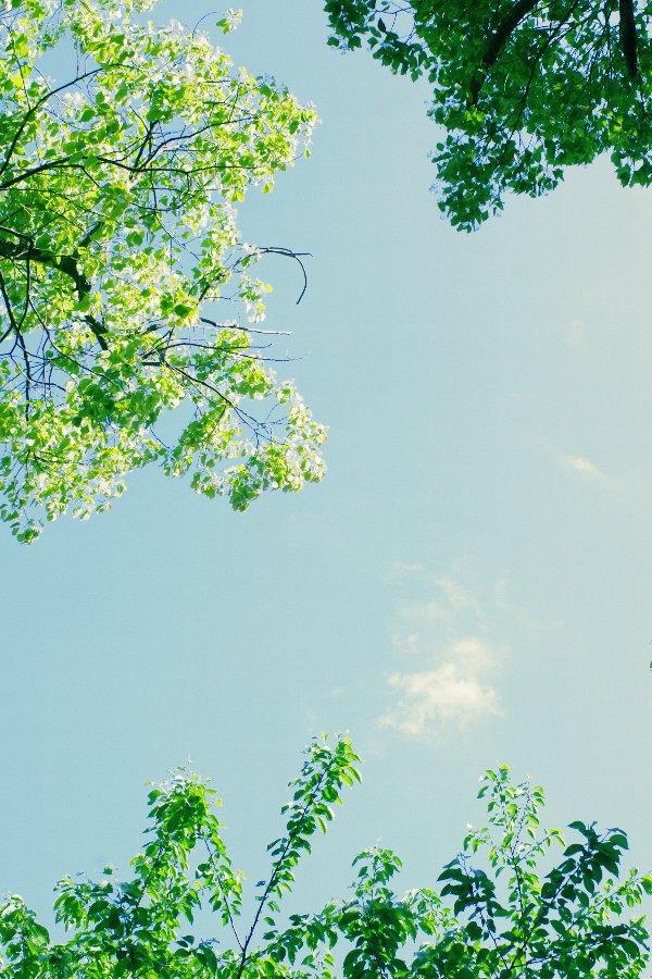 20110510_07.jpg