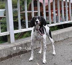 秋キャンプ20098