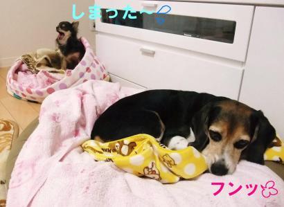 コピー ~ DSCF2451