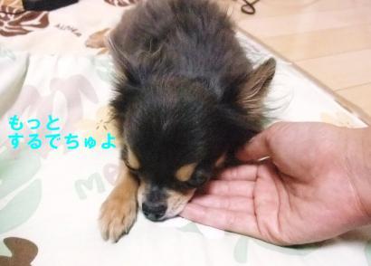 コピー ~ DSCF2466