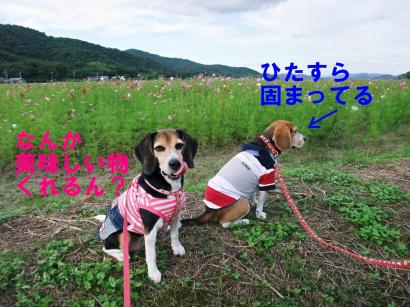 コピー ~ DSCF2614