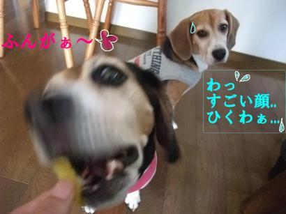 コピー ~ DSCF2783