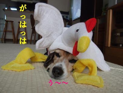 コピー ~ DSCF2791