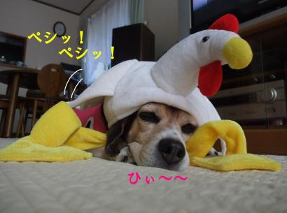 コピー ~ DSCF2790