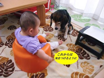コピー ~ DSCF1094