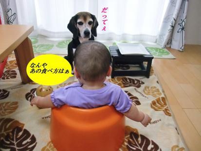 コピー ~ DSCF1090
