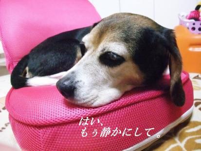 コピー ~ DSCF1444
