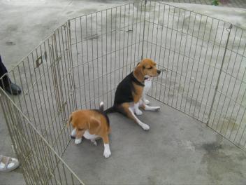 クーちゃん&ひまわりちゃん