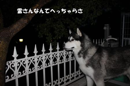 20110809_1.jpg