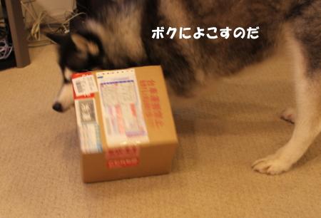 20110813_0.jpg