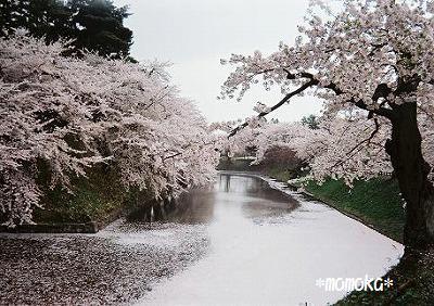 長女さん撮影の弘前城