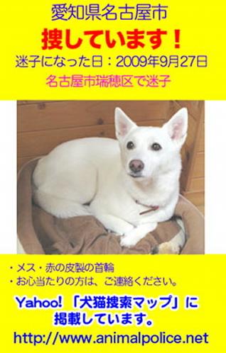 迷子・白犬.jpeg