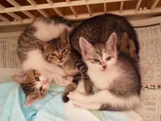 子猫3匹.jpeg
