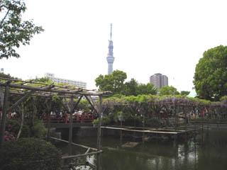 亀戸天神社1