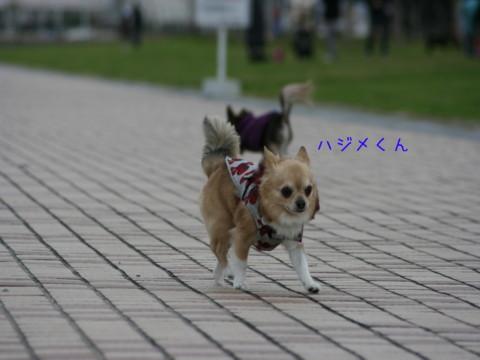 2009_12150102-001.jpg