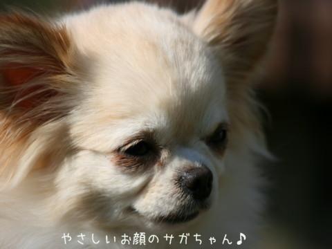 2010_04070311-001.jpg